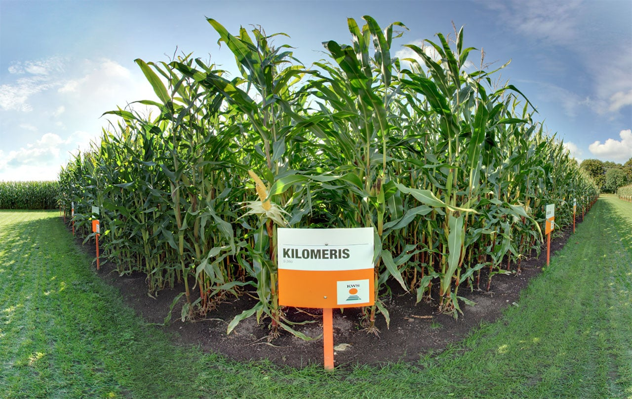 HDR 360° Panorama Landwirtschaft KWS Mais